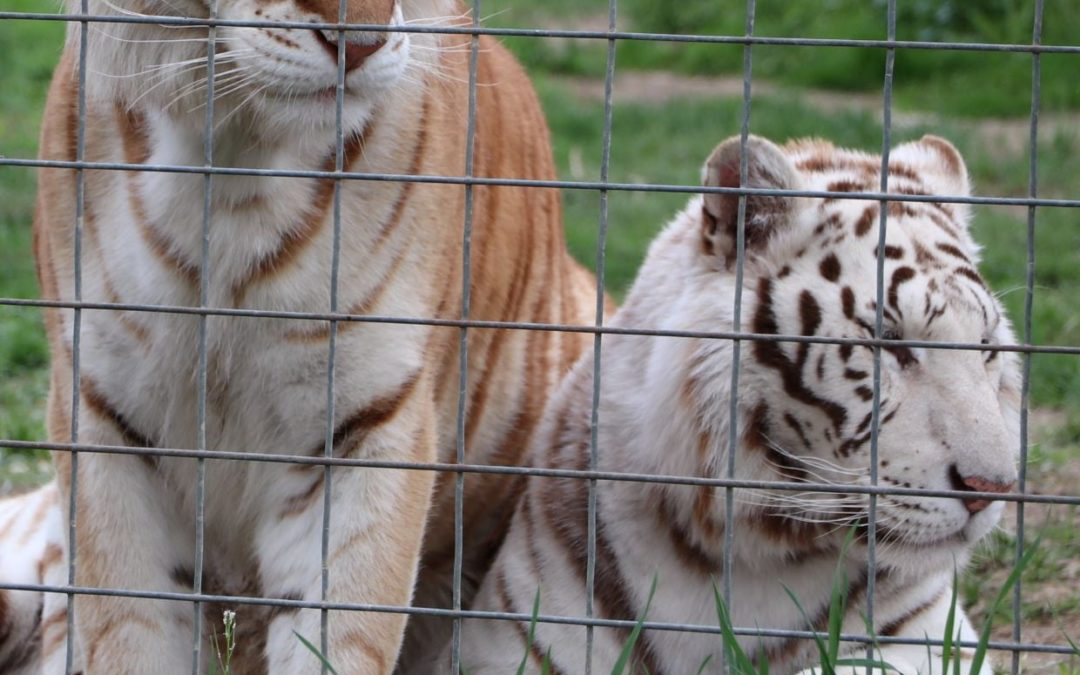Get Wild in Rural PA at T&D's Cats of the World